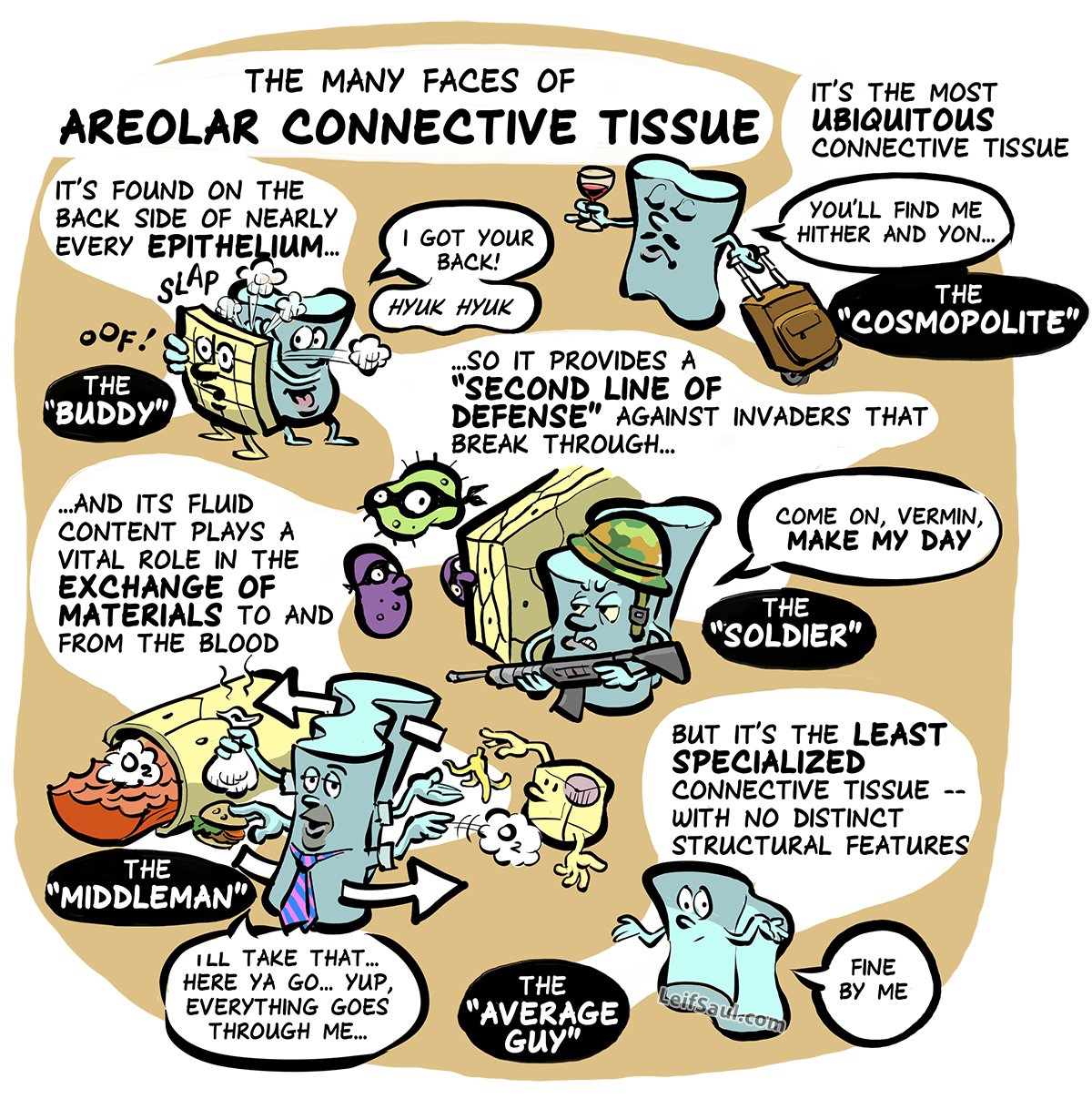 The many faces of areolar connective tissue