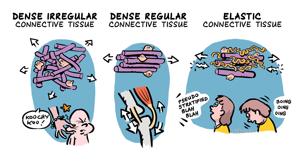 Dense connective tissue — diverse hardware for the body machine